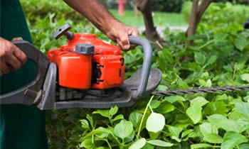Shrub Removal in Indianapolis IN Shrub Removal Services in Indianapolis IN Shrub Care in Indianapolis IN Landscaping in Indianapolis IN
