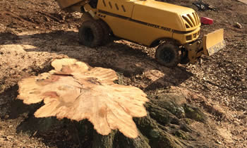 Stump Removal in Indianapolis IN Stump Removal Services in Indianapolis IN Stump Removal Professionals Indianapolis IN Tree Services in Indianapolis IN