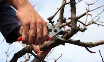 Tree Pruning in Indianapolis IN Tree Pruning Services in Indianapolis IN Quality Tree Pruning in Indianapolis IN