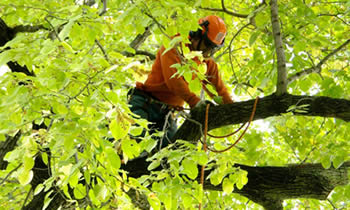 Tree Trimming in Indianapolis IN Tree Trimming Services in Indianapolis IN Tree Trimming Professionals in Indianapolis IN Tree Services in Indianapolis IN Tree Trimming Estimates in Indianapolis IN Tree Trimming Quotes in Indianapolis IN