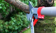 Tree Pruning Services in Indianapolis IN