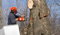 Tree Removal in Indianapolis IN